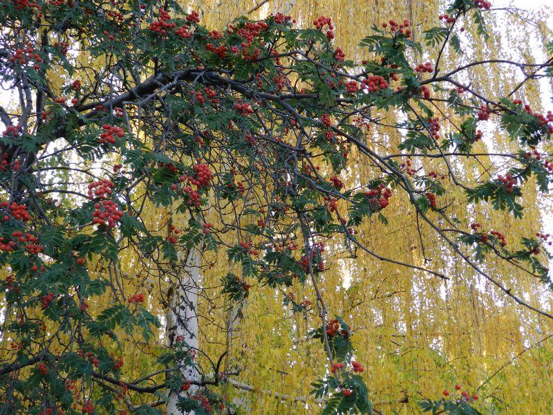 Beautiful fall day (2)