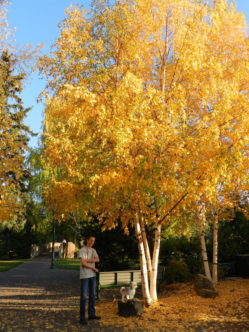 Beautiful fall day (5)