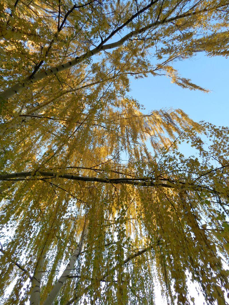 Beautiful fall day (3)