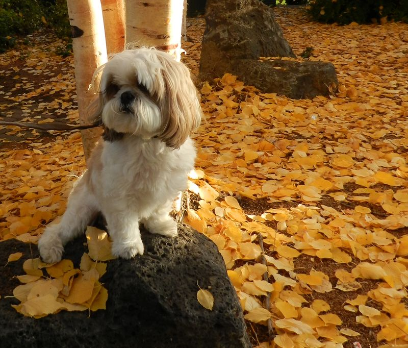 Scrabble among the leaves