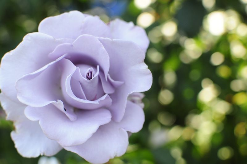 Portland International Rose Garden (6)