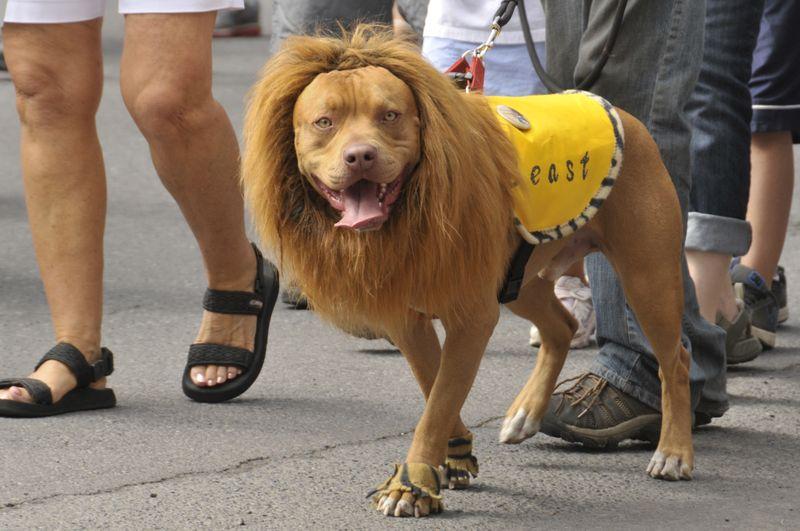 July 4th 2014 Pet Parade (21)