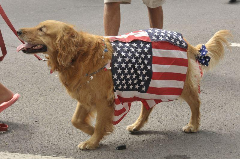 July 4th 2014 Pet Parade (22)