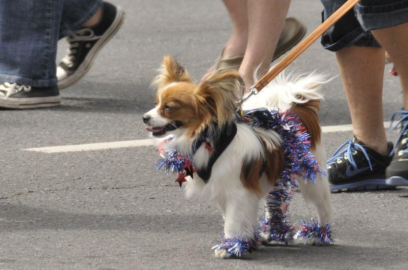 July 4th 2014 Pet Parade (16)