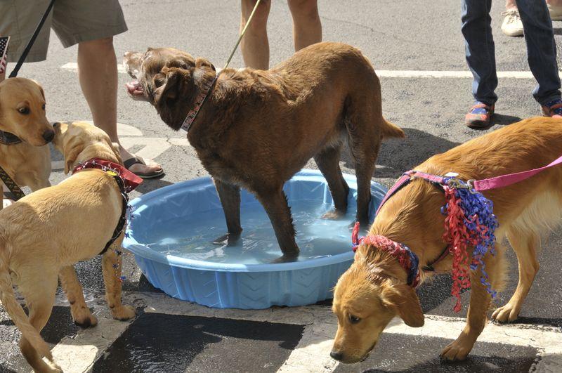 July 4th 2014 Pet Parade (41)