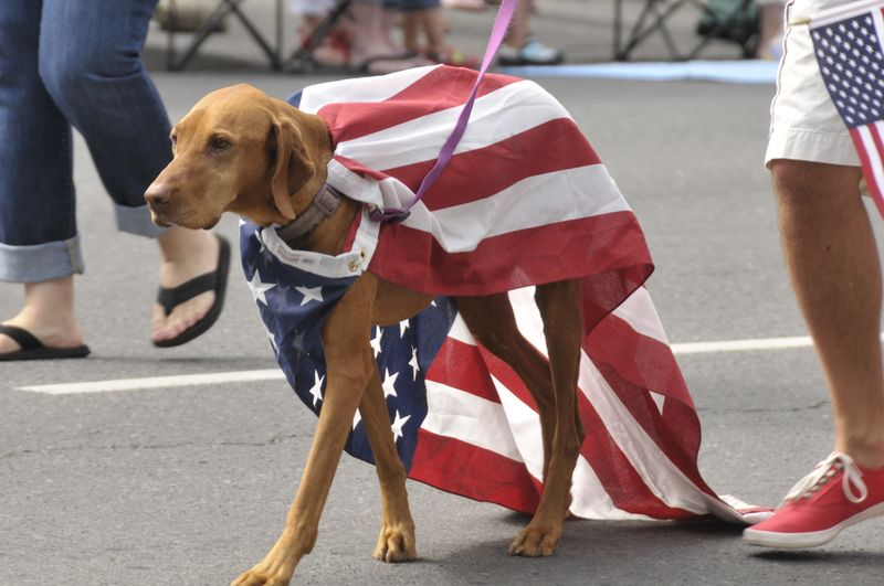 July 4th 2014 Pet Parade (2)