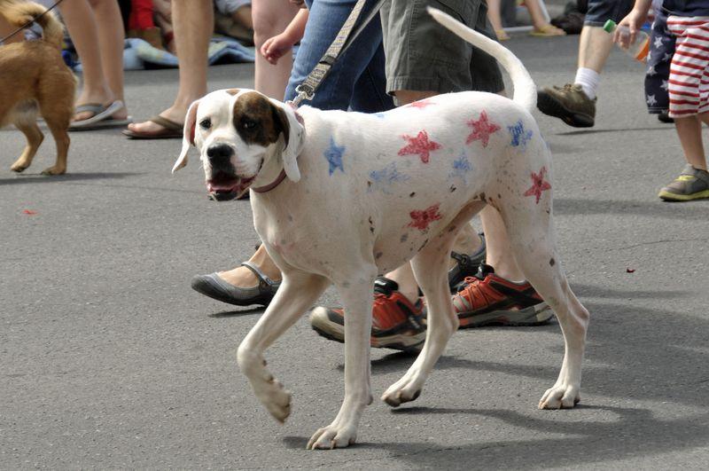 July 4th 2014 Pet Parade (25)