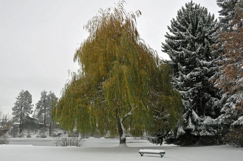 November Snow Day (99)